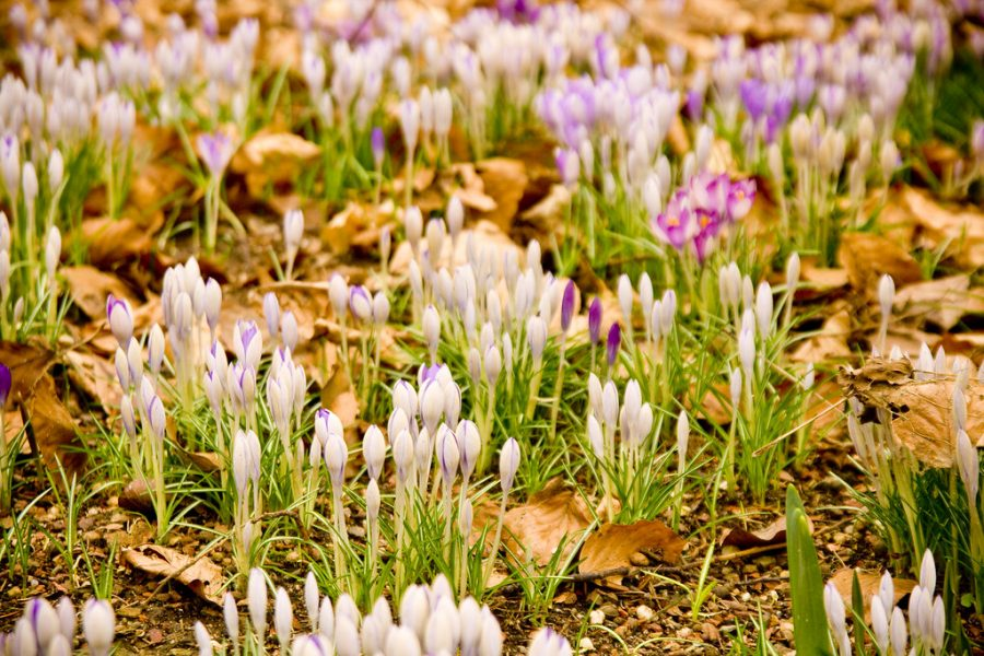 Spring Back Into Spring